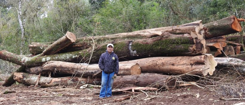 Ecología suspende explotación del bosque nativo