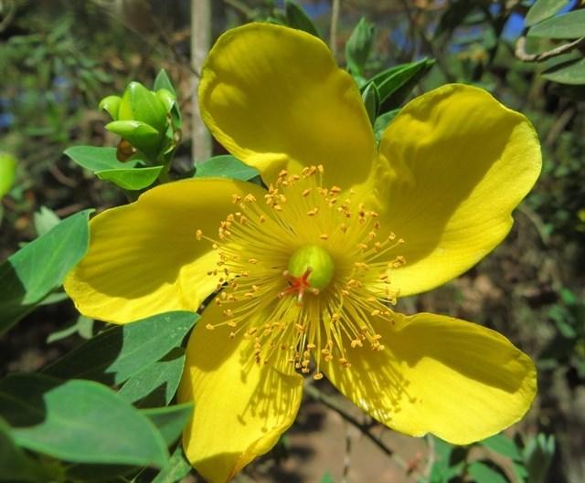 La palinoteca del Centro Pirenaico de Ecología tiene dentro muestras de flora africana